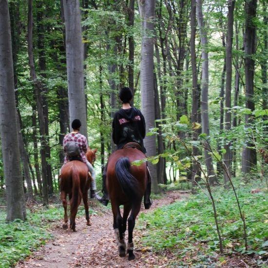 Jahanje kroz šumu