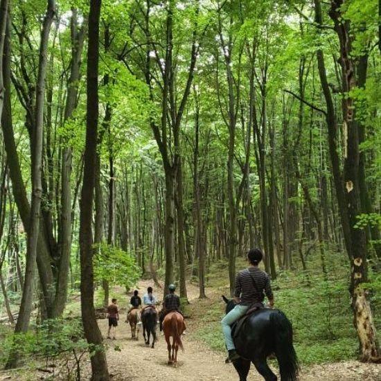 Terensko jahanje šumska staza