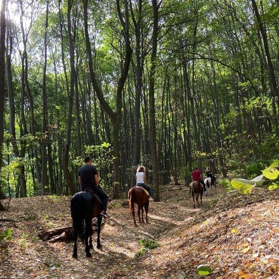 Obilazak Fruške gore na konjima Šumska štala