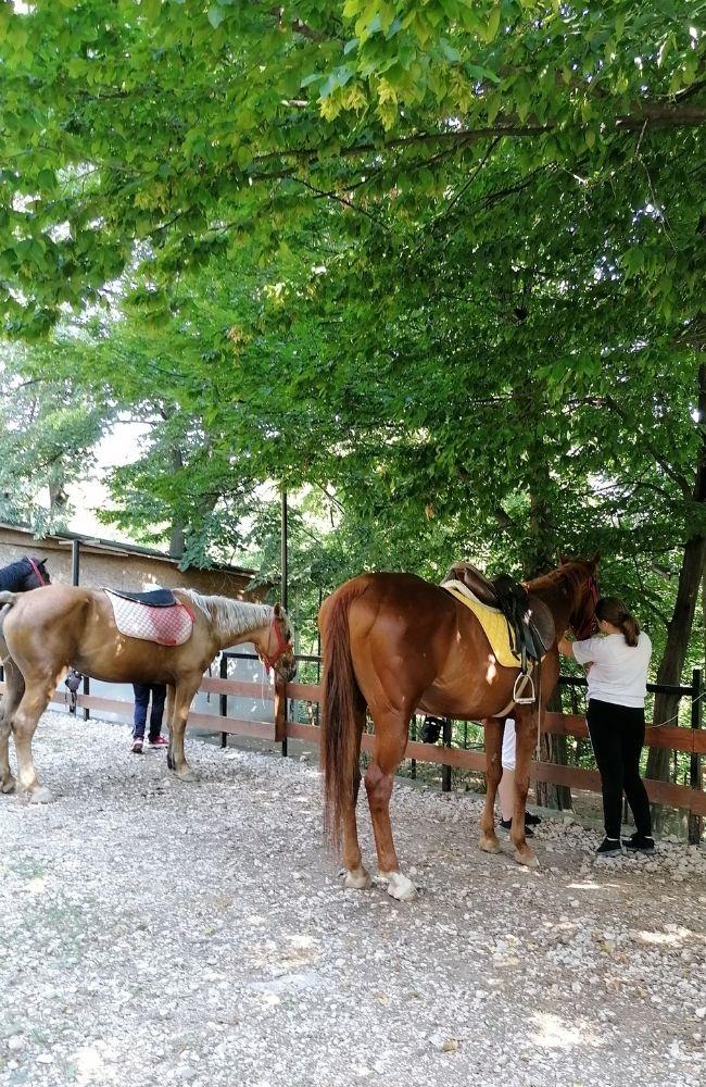 Priprema konja za jahanje