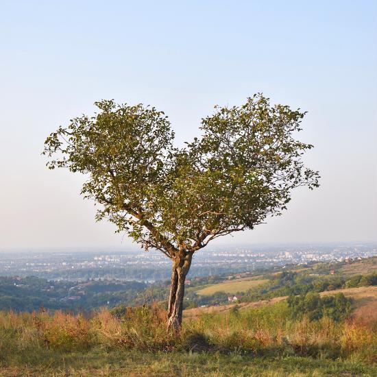 vidikovac na Fruškoj gori sa pogledom na Novi Sad